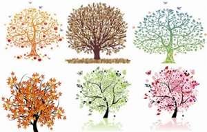 资讯生活临安:三年新种珍贵彩色树种10万亩